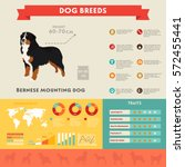 bernese mountain dog dog... | Shutterstock .eps vector #572455441