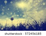 dandelion flower and spring  ... | Shutterstock . vector #572456185