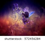Beautiful Blue Butterfly On...