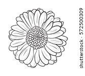 chamomile gerbera flower for... | Shutterstock .eps vector #572500309