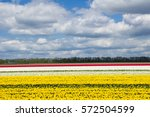 Spring Tulip Fields In Holland...