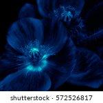 Floral Fine Art Detailed...