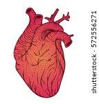 human heart line art. vector... | Shutterstock .eps vector #572556271