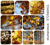 photo collage autumn | Shutterstock . vector #572560411