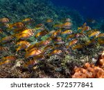 philippines palawan coron...   Shutterstock . vector #572577841