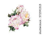 bouquet of roses  watercolor ... | Shutterstock . vector #572591515