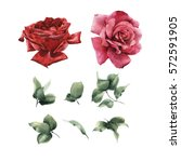Stock photo flowers and leaves watercolor can be used as greeting card invitation card for wedding birthday 572591905