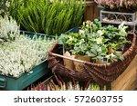 flowers are near a flower shop... | Shutterstock . vector #572603755