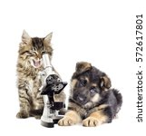 Stock photo kitten and puppy and microscope 572617801
