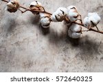 cotton flowers | Shutterstock . vector #572640325