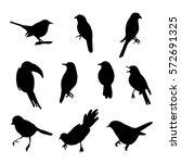 vector collection of bird... | Shutterstock .eps vector #572691325