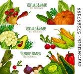 vegetables banners of vector... | Shutterstock .eps vector #572697199