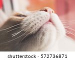 the cat looks up. portrait of a ... | Shutterstock . vector #572736871