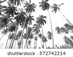 coconut trees at tropical beach ...   Shutterstock . vector #572742214