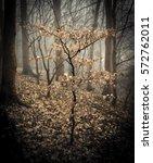 stylised beech in a dark wood   Shutterstock . vector #572762011