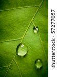 Oak Green Leaf And Water Drop...