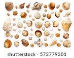 pattern of seashells. isolated... | Shutterstock . vector #572779201
