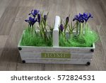 wite basket with blooming... | Shutterstock . vector #572824531