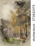 watercolour painting of autumn... | Shutterstock . vector #572832475