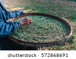 raising silkworms with mulberry ... | Shutterstock . vector #572868691
