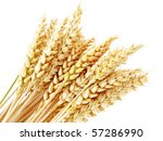 wheat ears isolated on the... | Shutterstock . vector #57286990