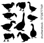 Geese Set   Vector