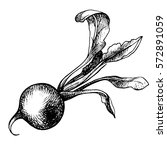 Hand Drawn Radish  Organic Eco...
