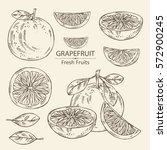 collection of grapefruit and... | Shutterstock .eps vector #572900245