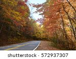 Fall Leaves In North Georgia