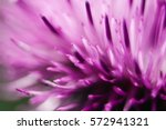 Closeup Of A Milk Thistle Flower