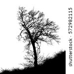 realistic tree silhouette ... | Shutterstock .eps vector #572982115