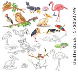 Set of different birds. Crow, woodpecker, owl, sparrows, pelican, flamingo, marabou, parrot, toucan. Coloring page. Illustration for children. Cute and funny cartoon characters isolated on white
