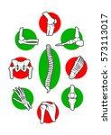 human skeleton bones and joints ... | Shutterstock .eps vector #573113017