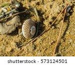 Single Seashell Laying Next To...