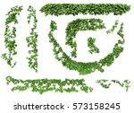 ivy leaves isolated on a white... | Shutterstock . vector #573158245