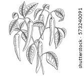 chilli pepper graphic bush... | Shutterstock .eps vector #573240091