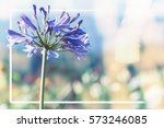 background nature flower.... | Shutterstock . vector #573246085