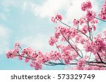 Beautiful Cherry Blossom Sakur...