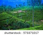 beautiful tea plantation in sri ... | Shutterstock . vector #573371017