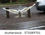 Sulfur Crested Cockatoo Bird...