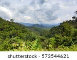 landscape with rainforest of... | Shutterstock . vector #573544621