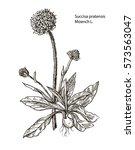 vector images of medicinal...   Shutterstock .eps vector #573563047
