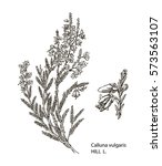 vector images of medicinal... | Shutterstock .eps vector #573563107