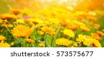 blurred summer background with... | Shutterstock . vector #573575677