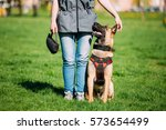 malinois dog sit outdoors in... | Shutterstock . vector #573654499