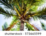 amazing view from palm tree... | Shutterstock . vector #573665599
