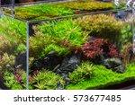 Decorative Aquarium With Plant...