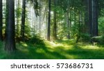 natural forest of spruce trees  ... | Shutterstock . vector #573686731