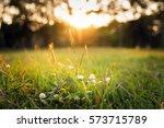 Summer Grass Meadow Motion Blu...