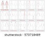 body meridians chart   female... | Shutterstock .eps vector #573718489